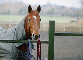 Equestrian & Livery Services Wirral