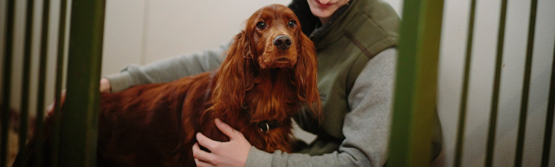 Dog Grooming and Kennels Wirral